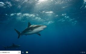 海洋生活(Ocean Life) Win10主题