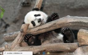 顽皮的熊猫 Win10主题